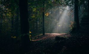 Zuerich Uetliberg Sonnenstrahlen im Wald