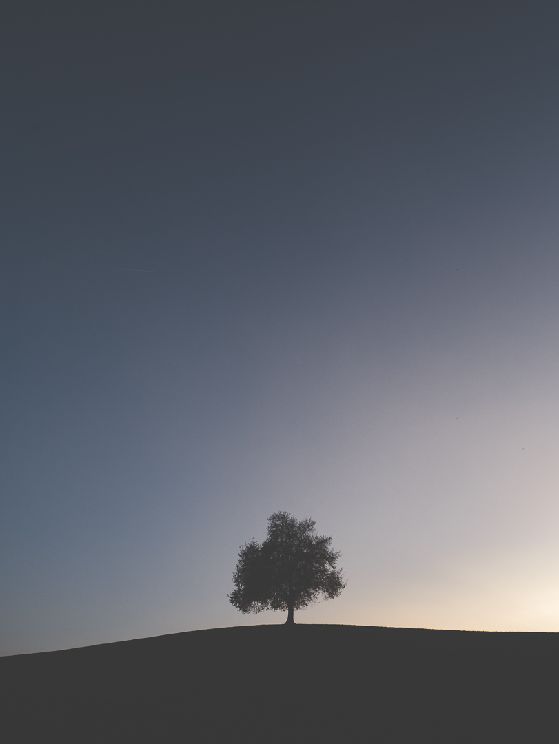 Zürich Felsenegg einsamer Baum