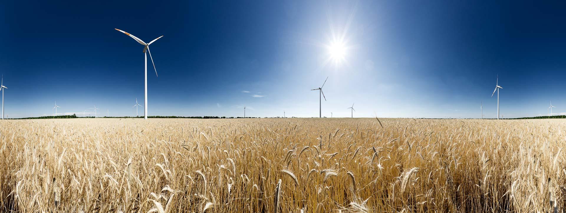 Windenergie Kornfeld – 360° Foto